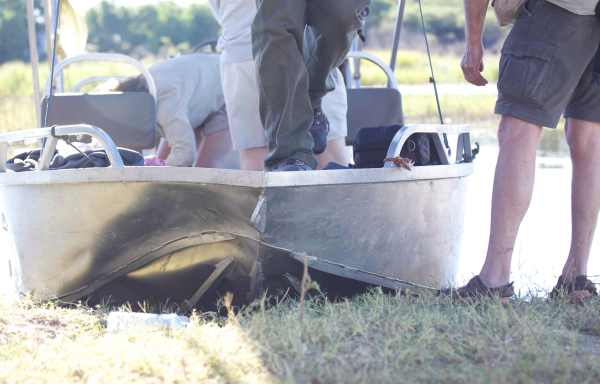 hippo-boating-accident-okovango-delta-botswana